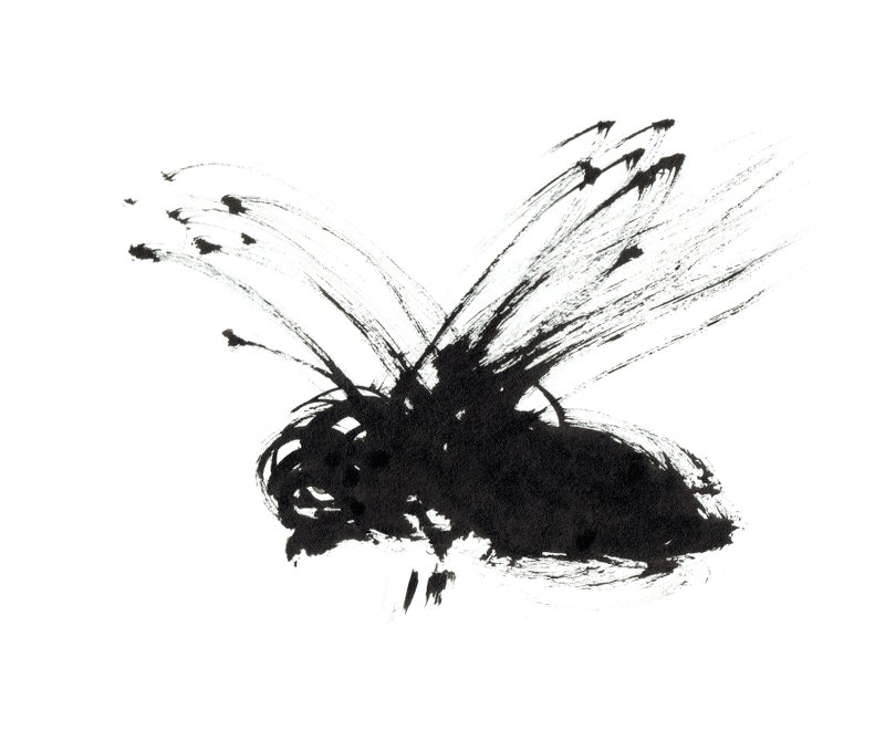 ink-paintbrush-drawing-fly